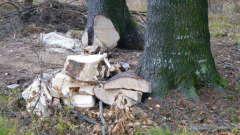 """Haiducii moderni şi """"cloşca cu puii de lemn"""""""