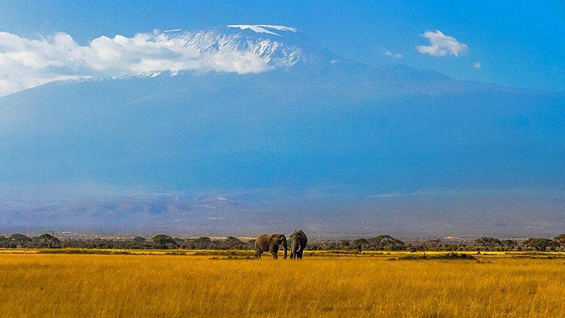 Asfalturile de pe Kilimanjaro şi alte prost-vestiri