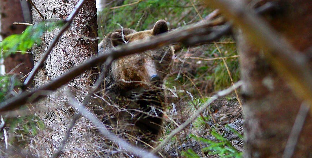 Ursuleț de un an, ucis mișelește și românește…într-un ghiveci cu flori